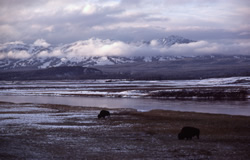 Yellowstone River & Washburn Range